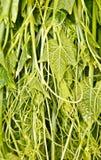 Vegetables. For ingredient food in maeket Royalty Free Stock Photo