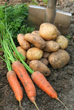 Vegetables. Royalty Free Stock Photo