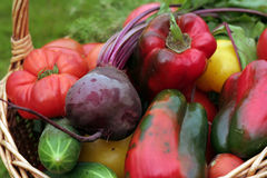 Vegetables. This is a close-up of fresh vegetables Royalty Free Stock Image