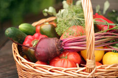 Vegetables. Basket with vegetables - autumn gifts of a nature Stock Photo