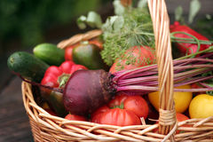 Vegetables. Basket with vegetables - autumn gifts of a nature Stock Photography