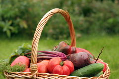 Vegetables. Basket with vegetables - autumn gifts of a nature Royalty Free Stock Photo
