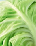 Vegetables Royalty Free Stock Images