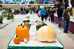 Vegetables in an Agricultural Fall Fair Competition Stock Photo