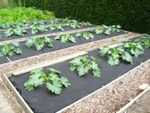 Vegetables in allotment Stock Images
