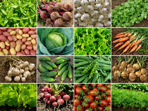 Vegetables And Greens Royalty Free Stock Photography