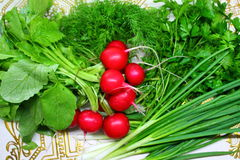 Vegetables. Appetizing fresh vegetables green sticks of onion, tuft of aroma parsley, crust red balls radishes and verdure of dill full of vitamin, healthy meal Stock Image