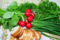 Vegetables. Appetizing fresh vegetables green sticks of onion, tuft of aroma parsley, crust red balls radishes and verdure of dill with toasts of white bread Stock Photo
