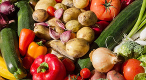 Vegetables arranged in a colorful group as a sunny still life Royalty Free Stock Image