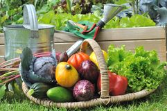Vegetables basket in garden Stock Photo