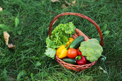 Vegetables in basket on green grass Royalty Free Stock Photos