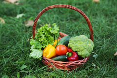 Vegetables in basket on green grass Royalty Free Stock Images