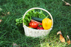 Vegetables in basket on green grass. Royalty Free Stock Photography