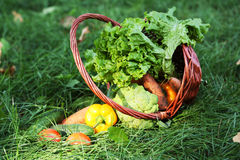 Vegetables in basket on green grass. Stock Photos