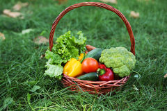Vegetables in basket on green grass. Stock Photo