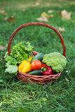 Vegetables in basket on green grass. Stock Image