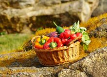 Vegetables in the basket Royalty Free Stock Photography