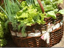 Vegetables in a basket placed near a vegetable patch.  Stock Images