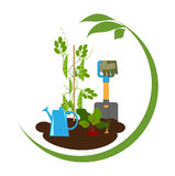 Vegetables in the beds and garden tools stock illustration