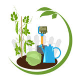 Vegetables in the beds and garden tools vector illustration