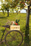 Vegetables bike four Stock Images