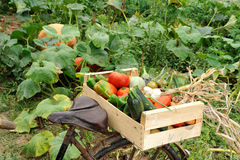 Vegetables Bike Two Royalty Free Stock Photo