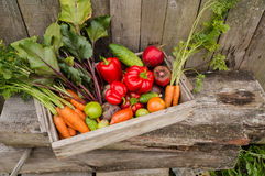 Vegetables in a box Stock Image