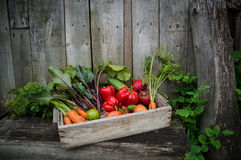 Vegetables in a box royalty free stock photos