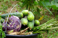 Vegetables in buckets Royalty Free Stock Images