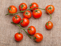 Vegetables Bunch of fresh tomatoes on sacking. Vegetables, Bunch of fresh tomatoes on sacking Royalty Free Stock Photos