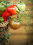 Vegetables bunch of peppers, tomatoes on branch and pepperoni Stock Photos