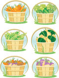 Vegetables in bushel baskets Royalty Free Stock Photos