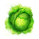 Vegetables: cabbage  on white Stock Images