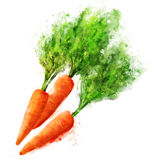 Vegetables: carrot on white Stock Image