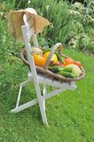 Vegetables on a chair Stock Photography