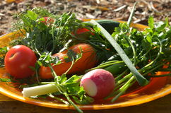 Plate of fresh vegetables Royalty Free Stock Photography
