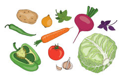 Vegetables and herbs fresh spring green organic vector collection. Tomato, paprika, pepper, chilly, red beet, potato, potatoes, garlic, carrot, cole, onion Stock Photo