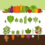 Vegetables collection. Organic and healthy food. Flat style, vec Stock Image
