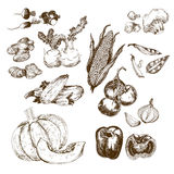 Vegetables collection. Royalty Free Stock Images