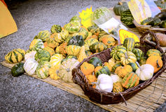 Vegetables. Color image Stock Photos