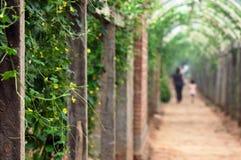 Vegetables corridor royalty free stock photos