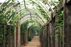 Vegetables corridor 2 stock images