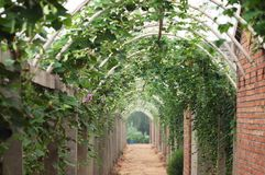 Vegetables corridor 4 Royalty Free Stock Photos