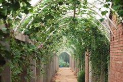 Vegetables corridor 4 royalty free stock photos