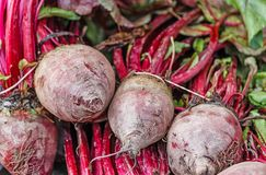 Fresh healthy beetroots. Vegetables display of fresh beetroots with leaves Stock Photography