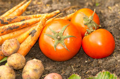 Vegetables displayed on soil Stock Photography
