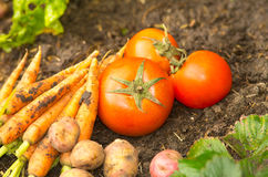 Vegetables displayed on soil Royalty Free Stock Photos