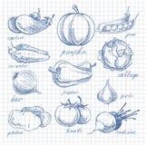 Vegetables doodle ink on notebook sheet in cell stock illustration