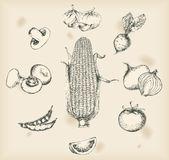 Vegetables drawing- isolated objects Royalty Free Stock Images