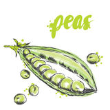 Vegetables drawn by hand. Vector vegetables. Food. Stock meal. Peas. Green pea. Royalty Free Stock Images
